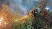 Xử lý nghiêm các hành vi gây cháy rừng ở Phú Yên