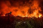 Cháy rừng trên diện rộng gây thiệt hại lớn tại Brazil