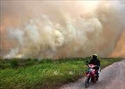 Cháy rừng dữ dội ở Indonesia, hàng nghìn người làm lễ cầu mưa