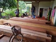 Phát hiện thêm 500m3 gỗ khi điều tra mở rộng vụ phá rừng quy mô lớn tại Đắk Lắk
