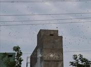Cử tri Bình Thuận kiến nghị quản lý việc xây nhà nuôi chim yến