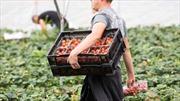 Khả năng Anh đẩy nhanh việc hạn chế lao động nhập cư tay nghề thấp