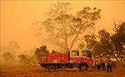 Australia mở cuộc điều tra toàn quốc về cháy rừng