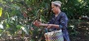 Thu nhập cao từ chuyển đổi cây trồng