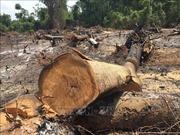 Điều tra, làm rõ vụ phá rừng giáp ranh Gia Lai - Đắk Lắk