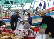 Triển khai Luật Thủy sản và khắc phục 'thẻ vàng' IUU
