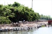Tu bổ, tôn tạo di tích Khu danh thắng Quốc gia Đảo Cò