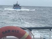 8 thuyền viên cùng tàu cá gặp nạn trên biển đã được đưa vào bờ an toàn
