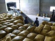Xuất khẩu gạo 9 tháng đạt gần 5 triệu tấn, tăng 23,2% giá trị