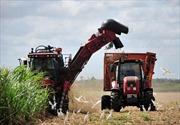 Cuba hối thúc tất cả các nhà máy tinh chế đường đi vào hoạt động