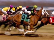 Đề nghị cho phép Trường đua ngựa Thiên Mã được kinh doanh đặt cược