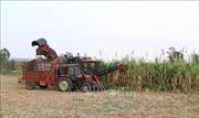 Người Bahnar ứng dụng công nghệ trên cánh đồng mẫu lớn để thoát nghèo