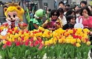 Hàn Quốc chuẩn bị hơn 1 triệu bông hoa Tulip cho lễ hội