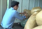 Vận chuyển hơn 2 tấn nội tạng lợn ôi thối đi tiêu thụ