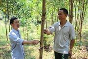 Nông dân miền núi Thanh Hóa thoát nghèo nhờ phát triển kinh tế rừng
