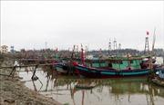 Nam Định tập trung bảo vệ cây trồng, vật nuôi trước nguy cơ bão số 3 đổ bộ