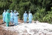 Xuất hiện ổ dịch tả lợn châu Phi đầu tiên tại Tây Ninh