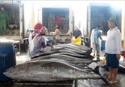 Phối hợp ngăn chặn khai thác thủy sản bất hợp pháp