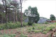 Xử lý nghiêm hành vi lấn chiếm đất rừng, xây dựng trái phép trên Quốc lộ 28B