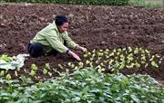 10 năm nông thôn mới: Hiệu quả từ tái cơ cấu nông nghiệp