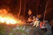 Hỏa hoạn thiêu rụi 20 ha rừng trồng cây keo tại Bình Định