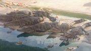 Cá sấu lớn nổi đầu trên sông Tam Giang là thông tin sai sự thật