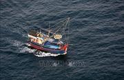 Khắc phục 'Thẻ vàng' IUU: Quản lý chặt tàu cá khai thác thủy sản trên biển