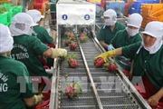 Phát triển trái cây thành ngành hàng chiến lược - Bài 2: Xây dựng vùng nguyên liệu vững chắc