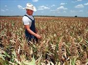 Trung Quốc khẳng định tăng mua nông sản Mỹ