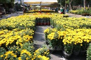 Trà Vinh: Khoảng 300.000 chậu hoa cảnh cung ứng cho Tết Nguyên đán