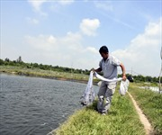Lãi tiền tỷ mỗi năm nhờ nuôi xen canh tôm và cá chẽm