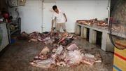 Bắt quả tang hộ kinh doanh thực phẩm trữ 790 kg thịt lợn đổi màu, bốc mùi