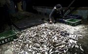 Từ 1/4, Israel nới lỏng hạn chế đối với ngư dân Palestine tại Dải Gaza