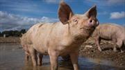 Thanh niên 18 tuổi chết vì ấu trùng sán lợn 'làm tổ' trong não