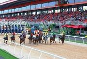 Trường đua ngựa 420 triệu USD đặt tại huyện Sóc Sơn