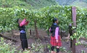 Thúc đẩy phát triển kinh tế - xã hội vùng đồng bào dân tộc thiểu số và miền núi