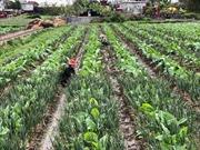 Nông dân Thái Bình ra đồng sản xuất đầu năm