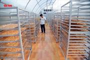 Ứng dụng năng lượng mặt trời nâng cao chất lượng bánh phồng tôm