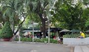 Dân số 10 triệu, nhưng TP Hồ Chí Minh chỉ có 100.000 cây xanh