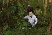 Kiểm tra phòng chống cháy rừng tại Khu bảo tồn thiên nhiên Lung Ngọc Hoàng