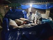 Hỗ trợ các hộ chăn nuôi bị thiệt hại do dịch tả lợn châu Phi