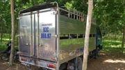 Xe tải chở hơn 2 tấn lợn không giấy tờ từ vùng dịch đi tiêu thụ