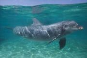 Canada cấm đánh bắt và nuôi nhốt cá voi, cá heo phục vụ giải trí