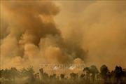 Dùng máy bay chữa cháy rừng ở Israel