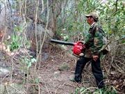 Quảng Ngãi thiệt hại khoảng 400 triệu đồng vì cháy rừng
