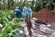 Kiểm soát chặt việc tiêu độc khử trùng, ngăn chặn dịch tả lợn châu Phi