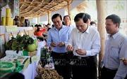 Gần 365.000 tỷ đồng xây dựng nông thôn mới tại Duyên hải Nam Trung Bộ, Tây Nguyên