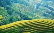 Khám phá 'Qua miền những di sản ruộng bậc thang' Hoàng Su Phì
