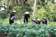 Vĩnh Long đưa du lịch trở thành ngành kinh tế mũi nhọn - Bài 1: Chú trọng phát triển các thế mạnh