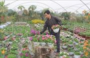 Nhà vườn sẵn sàng cho vụ hoa Tết